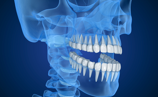 A skeletal rendering of the face with teeth highlighted for Bone Grafting treatment at Mid Valley Dental, in Menasha, WI